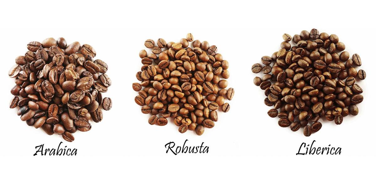قهوه چیست؟ رست چیست؟ عربیکا ، روبوستا چیست؟فواید کافئین ؟ - فروشگاه اینترنتی ایلی مارکت